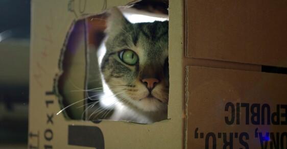 Číhající kočka