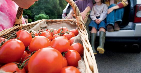 Rajčatům se připisuje preventivní působení proti rakovině. Nyní se preferuje tepelné zpracování doplněné rostlinným olejem, kdy účinný lykopen se lépe vstřebává.