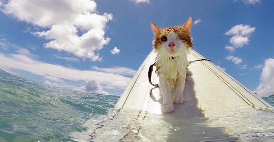 Jednooká kočka sjíždí vlny
