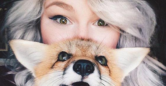 Chovat lišku není snadné a stojí to hodně peřin