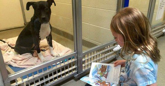 V Americe je hitem speciální program, kdy děti čtou pejskům v útulku z knížek
