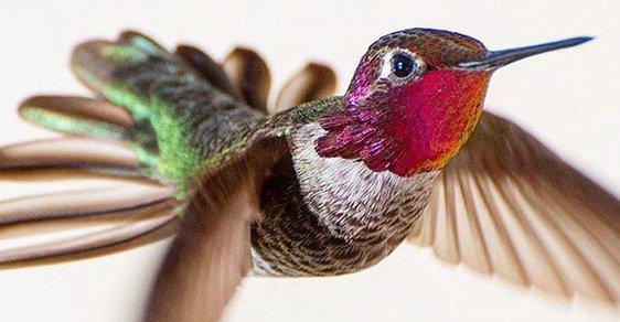Kolibříci si (bůhvíproč) oblíbili zpěvačku. Ta se o ně alespoň podělila