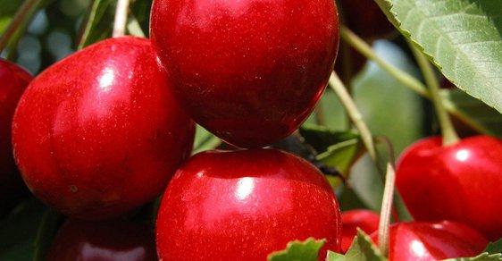 Vláda chce odškodnit pěstitele ovoce a vína kvůli dubnovým mrazům.