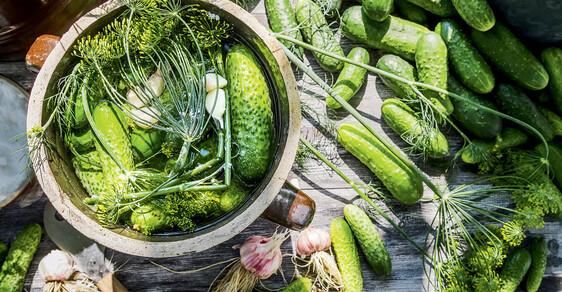 Nakládané okurky patří mezi naše gastronomické národní poklady. Tak si je hýčkejme.