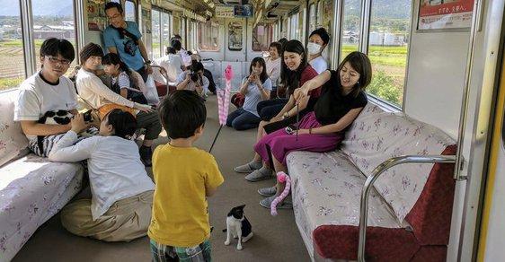Nejnovější trend v cestování: Japonci začali sdílet jízdu vlakem s koťaty