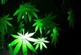Cannabis Cup je opět tady!