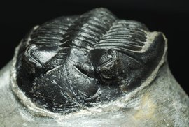 Fascinuje vás minulost? Projeďte se za trilobity a k nejvýchodnějšímu evropskému sídlišti Keltů