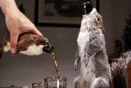 Mrtvé veverky, revoluce a amnestie na mizerné pivo