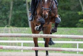 David Svoboda: Jezdectví jako soužití se ženou