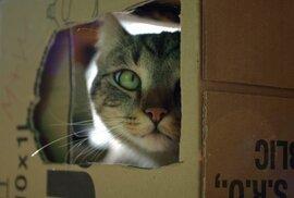Dva lidé se nakazili tuberkulózou od domácí kočky