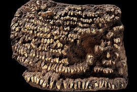 Peněženka posetá psími zuby, 4500 let