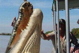 Gigantický krokodýl měří pět a půl metru.