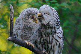 Mateřská (a otcovská, samozřejmě) ptačí láska