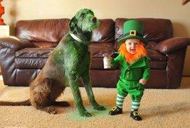 Irové slaví svátek Sv. Patrika. Někteří převlékají děti za skřítka