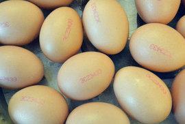 Dioxiny v polských vejcích: zdravotní riziko i boj o podíl na vaječném trhu