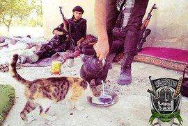Islámský stát zakázal chovat kočky, bojovníci vyhledávají koťata v domech