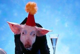 7 věcí, které nevíte o alkoholu: Kolik je bublinek v šampaňském a proč je na ginu prase s korunkou?