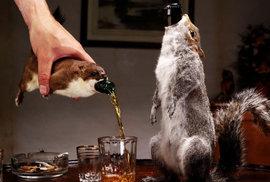 Nic bizarnějšího si v hospodě neobjednáte. Silné pivo za půl miliónu dostanete v těle mrtvé veverky