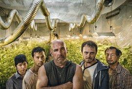 Vietnamci, marihuana a smrt. Nový český seriál Pěstírna vás dostane do diváckého rauše