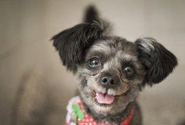 Zvířecí příběh roku: Jihokorejský prezident si vzal domů psa, který měl být předtím sněden