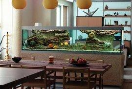 Rybičky jako dekorace