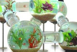Ryby už nemusíte mít v akváriu. Dnes je lidé mají v nočním stolku, v hodinách, a dokonce i v záchodě
