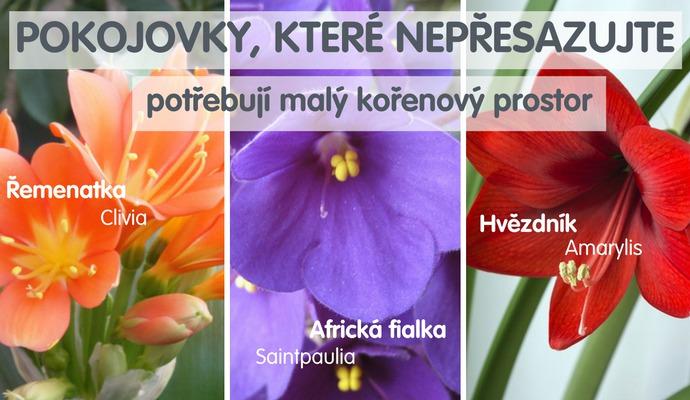 Tyto 3 rostliny nepřesazujte do většího květináče, pouze vyměňte část staré hlíny.