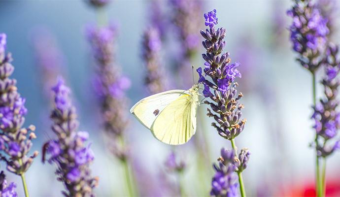 Motýli a jiní létající návštěvníci se stanou příjemným zpestřením posezení.