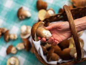 28 skvělých důvodů, proč chodit na houby. Tak vyrazte!