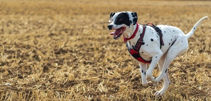 4 najlepšie tipy na športovanie so psím parťákom