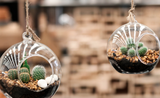Darujte k MDŽ aerárium, skleněný květináč, který visí ve vzduchu