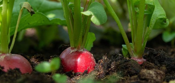 Založte nový záhon: 7 krokov k vlastnej čerstvej zelenine