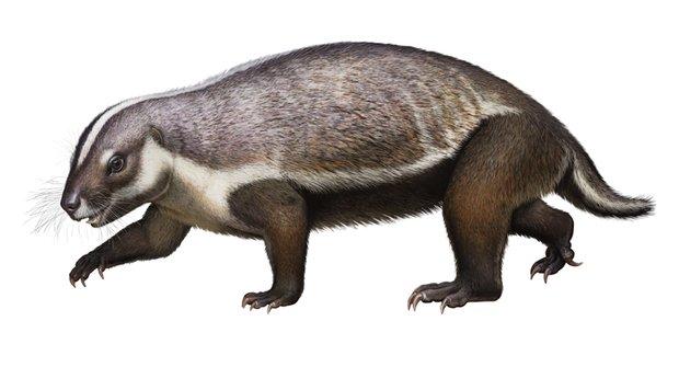Šílené zvíře: Takového savce z doby dinosaurů vědci ještě neviděli!