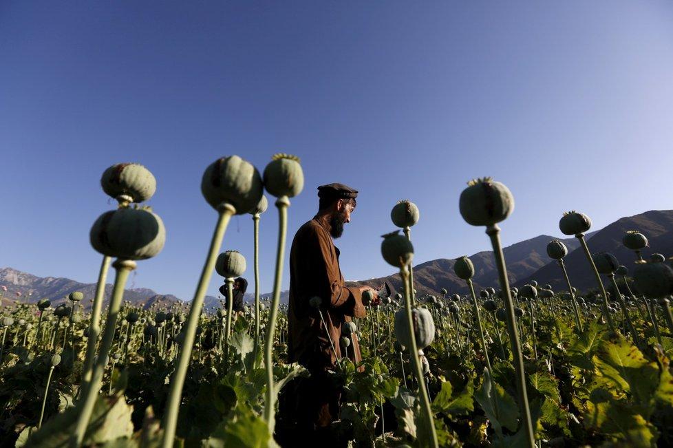 Velkou část příjmů Tálibánu představují drogy.