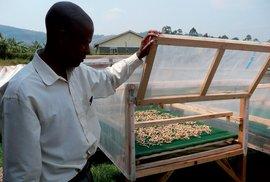 Pěstování hlívy ústřičné je pro některé Uganďany vítaným zdrojem obživy