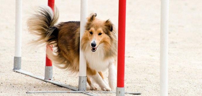 Vytvořte se svým psem sehraný tým: tipy, jak začít s agility