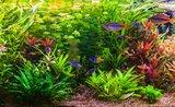 14 TOP rad, jak založit akvárium