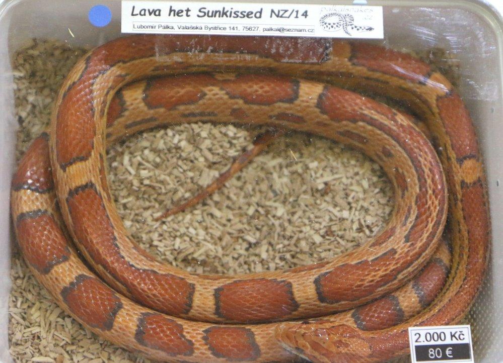 Hady, štíry, pavouky, chameleony, červy, hlodavce, nebo třeba rybičky si mohli na brněnském výstavišti koupit návštěvníci výstavy Aquatera.