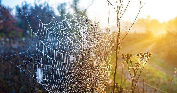 Symbolem babího léta jsou orosené pavučinky.