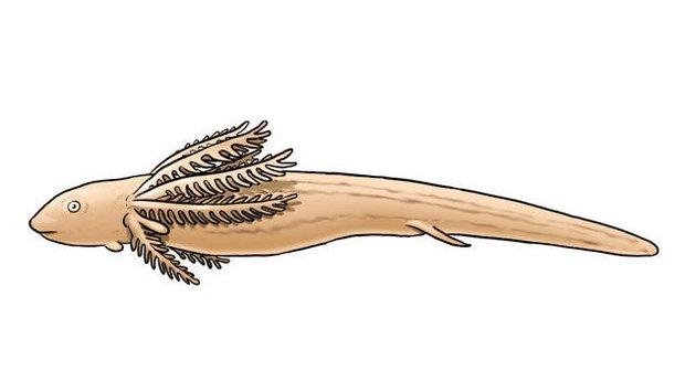 Bahníci: starší než dinosauři