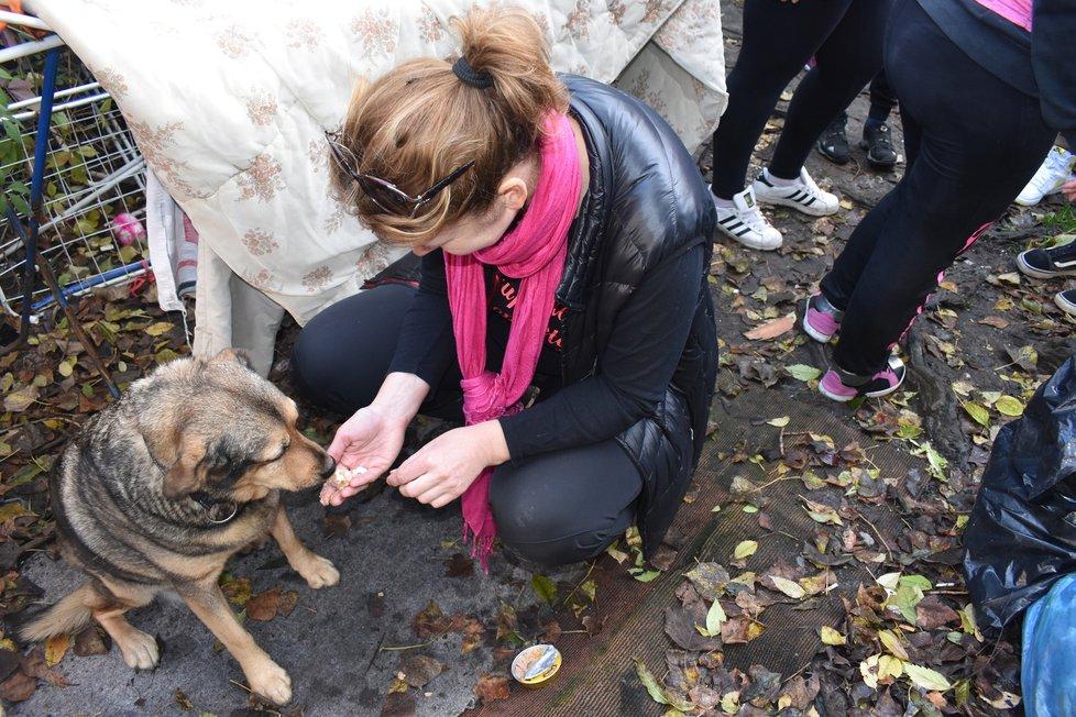 S ochránci zvířat v bezdomoveckých koloniích