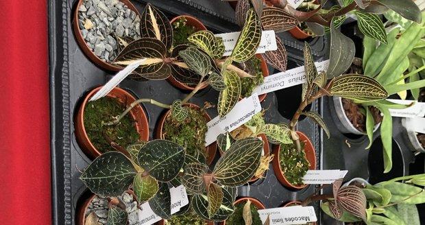 Prodej orchidejí v zázemí botanické zahrady
