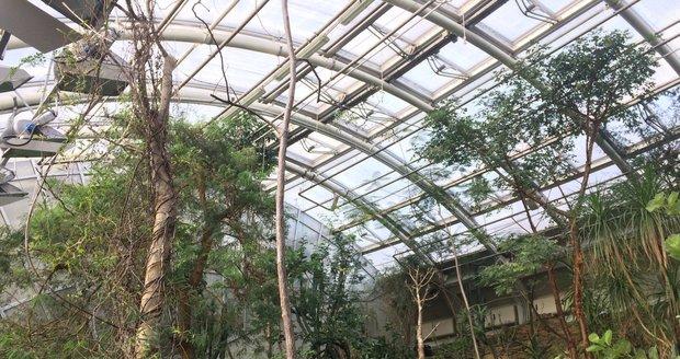 Botanická zahrada v Praze zahájí výstavu orchidejí ve skleníku Fata Morgana.