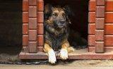 Kompletní návod: jak jednoduše postavíte psí boudu