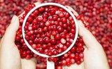 Zdravé a lahodné: naplňte si bříška brusinkami