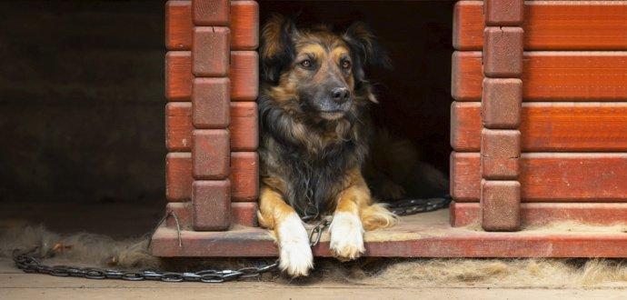 Kompletný návod: ako jednoducho postavíte psiu búdu