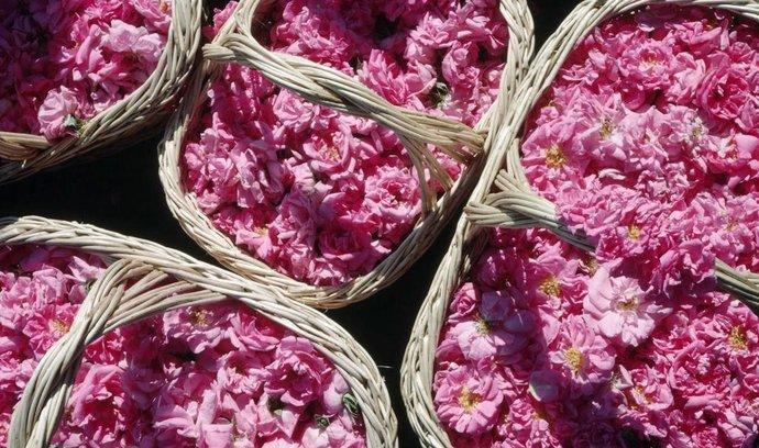 Bulharský růžový olej je pro výrobce parfémů nenahraditelný