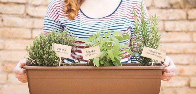 Vypestujte si domáce bylinky
