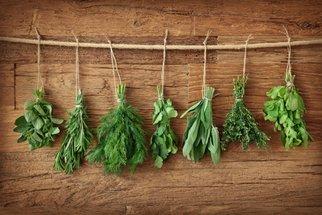 5 tipů, jak pěstovat bylinky, aby krásně rostly