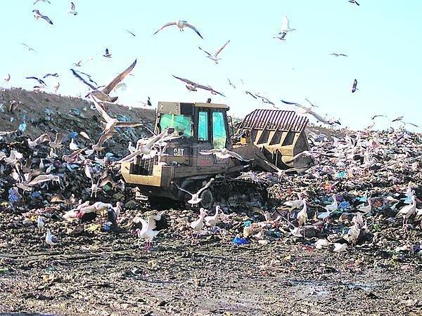 Obří skládku odpadků ve Španělsku si migrující čápi zvolili za své zimoviště.